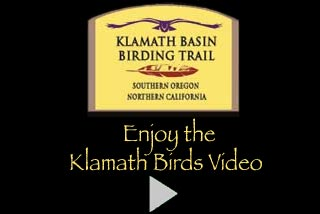 A six minute video showing birds found in the Klamath Basin during the early spring.